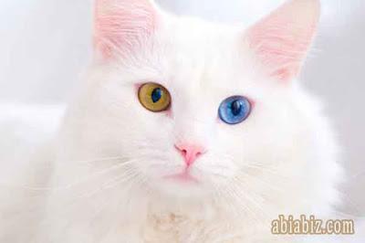 hadist tentang menyayangi kucing