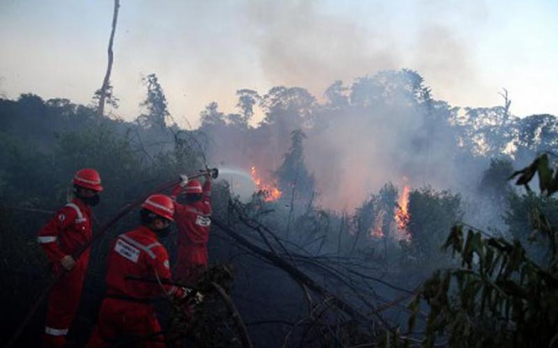 Faktor Penyebab Terjadinya Kebakaran Hutan