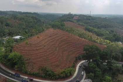 Periode Pertama Jokowi, Luas Hutan Indonesia Berkurang 2,6 Juta Hektare