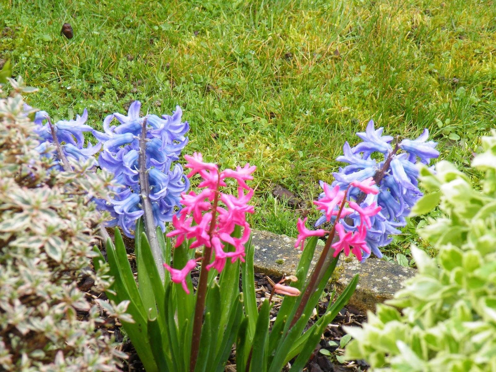 Du four au jardin et mes dix doigts fleurs de printemps for Fleurs au jardin