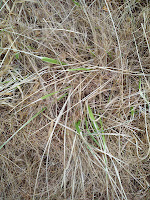 Tall Fescue regrowth with Nature's Avenger