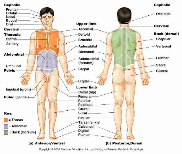 Human Full Body Part Name with Images Chart list