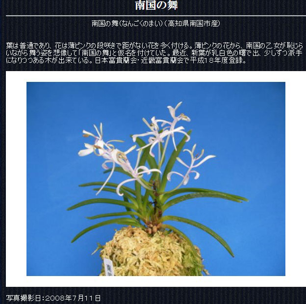 http://www.fuuran.jp/jiman_nangokunomai.html#%E5%8D%97%E5%9B%BD%E3%81%AE%E8%88%9E%E3%81%AE%E8%A9%B3%E7%B4%B0