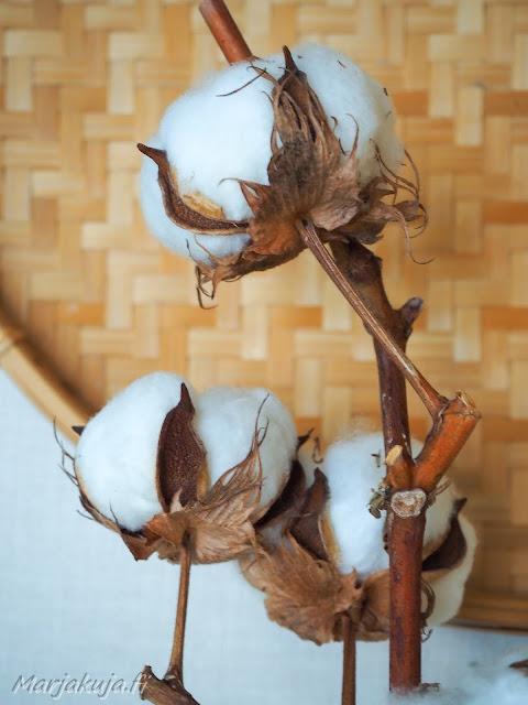 asetelma boho boheemi sisustus puuvilla oksa kuivakukka rottinki