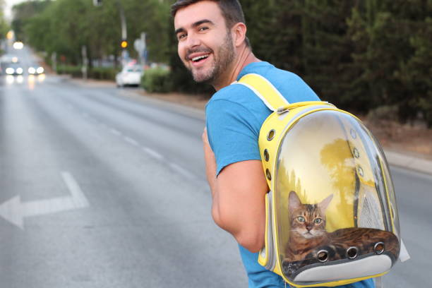 Cat Carrier – Why You Really Need One