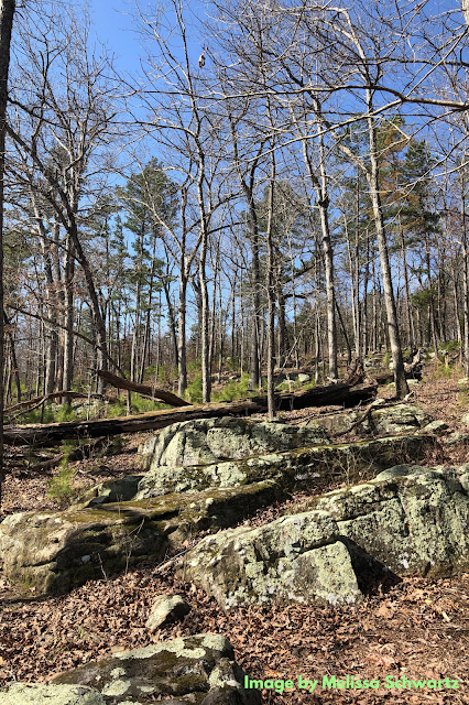 Chunky moss and lichen covered boulders add drama to the landscape at Missouri's Hawn State Park.