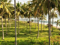 7 manfaat pohon kelapa yang perlu kita ketahui