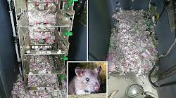 Một Chú Chuột Qua Đời, Sau Khi Đột Nhập Và Cắn Nát Số Tiền Trị Giá 18000 USD Trong Cây ATM