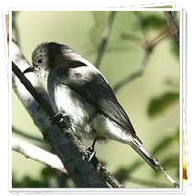 Honeyguide Amazing Facts , Honeyguide Amazing Fact