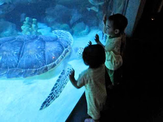 Children Aquaria Aquarium Kuala Lumpur Malaysia