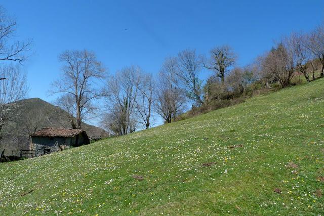Cabañas del Corralín - Piloña - Asturias