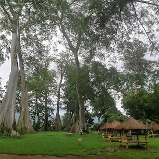 pohon lian purba lombok