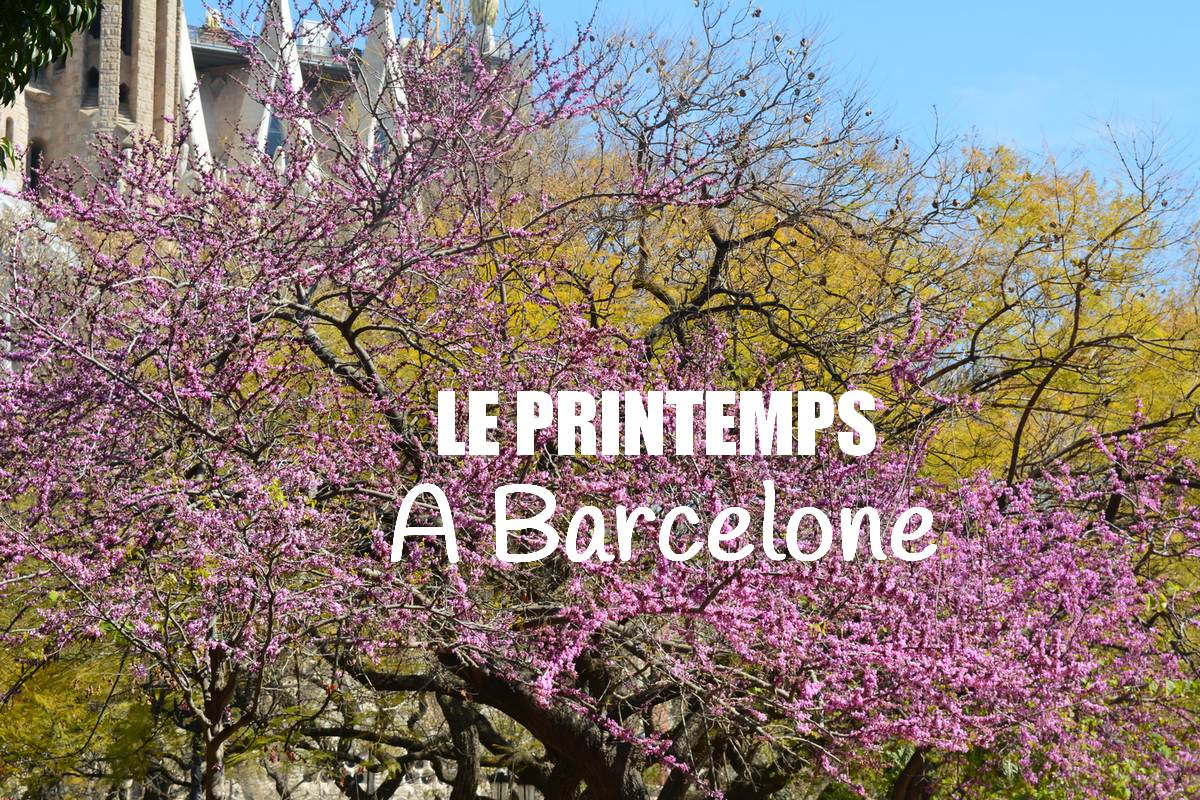 arbres fleuris Sagrada Familia