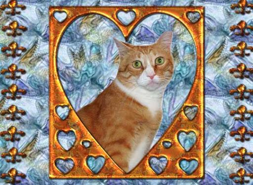 Timmy Tomcat Forever