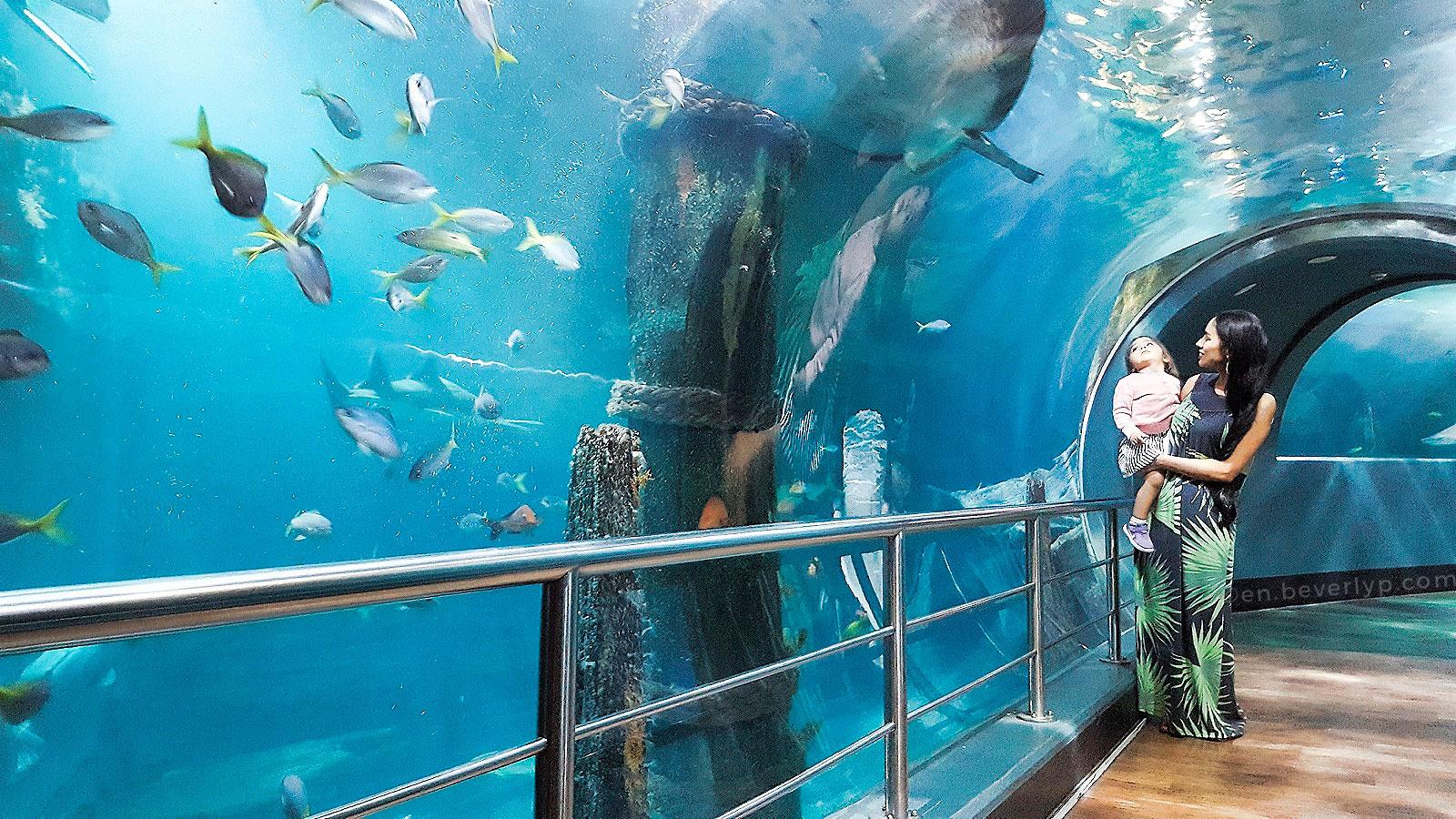 Melbourne-aquarium-visit-victoria