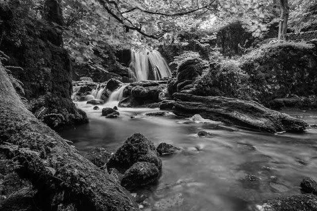 El lenguaje de los bosques (cuentos del Baztán)