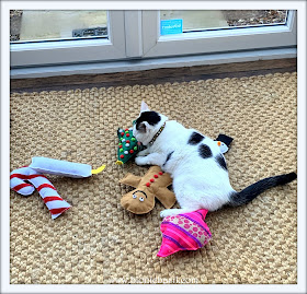 Look Who's Hogging All The Toys ©BionicBasil® Sunday Selfies