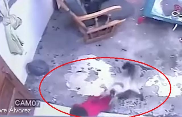 Macja Shpëton Fëmijën në çastin e fundit nga rënia nga Shkallët