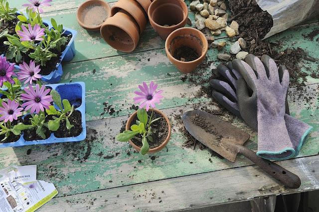 Garden Supplies Every Amateur Gardeners Must Have