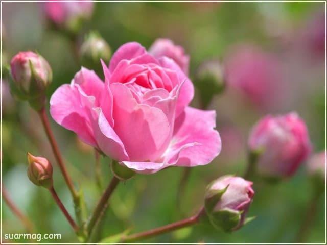 صور ورد 6 | Flowers Photos 6