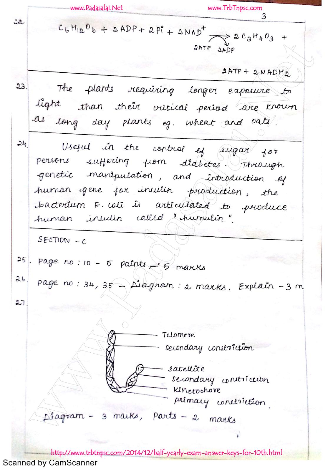 12th Bio-Botany | Half Yearly Exam Answer Key - English Medium