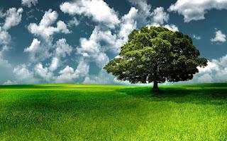 صور اشجار خضراء