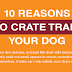 10 Reasons to Crate Train Your Dog #infographic
