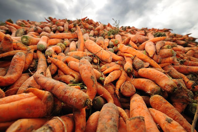 One-third of food does not need to be wasted.Credit: Alistair Scott/Alamy