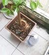 Cách chế bình tưới cây đơn giản dùng được cả tháng