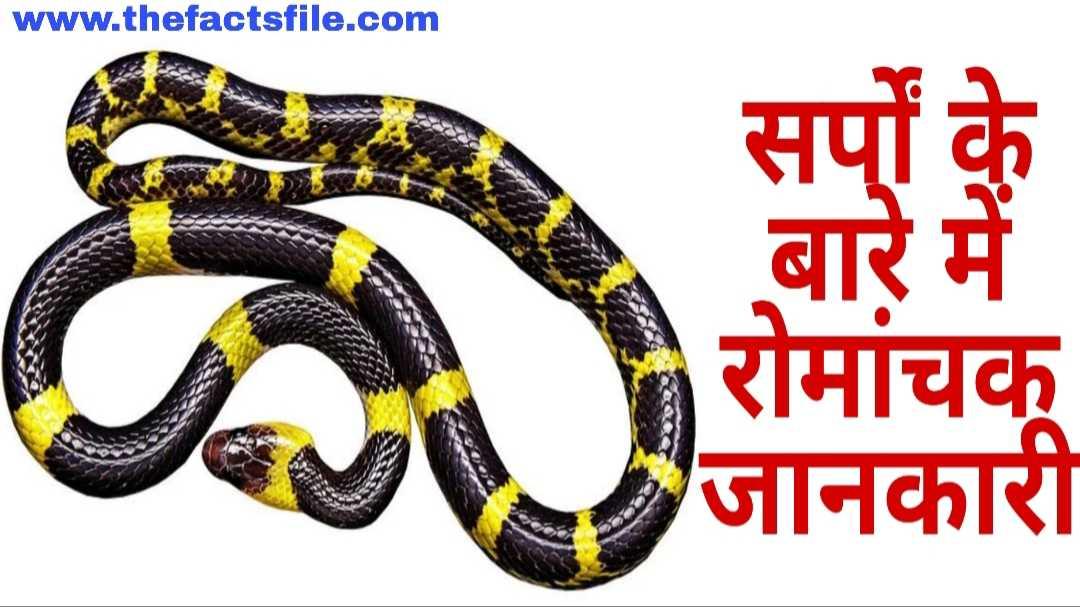 सांप के बारे में  21 मजेदार तथ्य-Snakes facts in Hindi