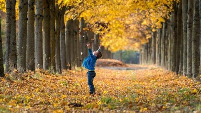 Η κλιματική αλλαγή ρίχνει νωρίτερα τα  φθινοπωρινά φύλλα