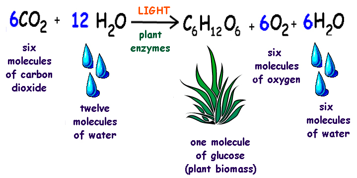 write a balanced equation for the overall process of photosynthesis
