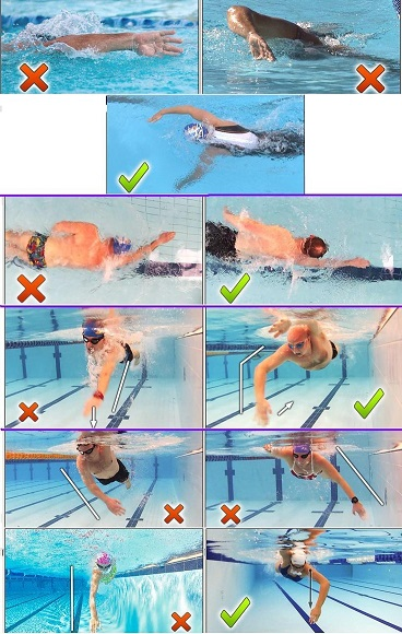 Correct Freestyle Technique Infografic