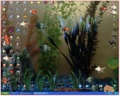 duniaku duniamu jua aquarium desktop 2012