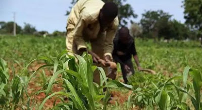 Farmers Cry Out As Fulani Herdsmen Rape Minors, Cut Off Man's Hand In Oyo