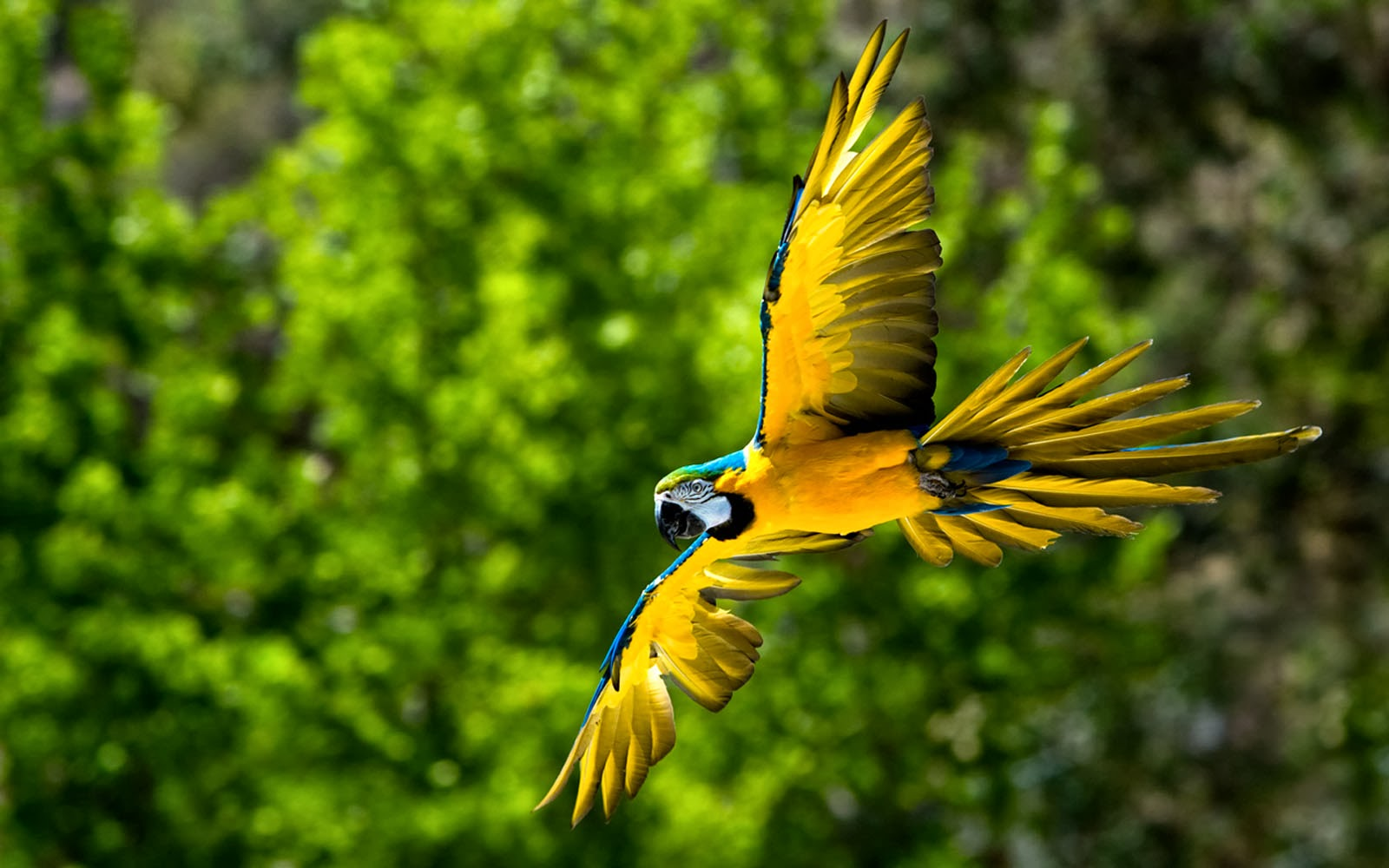 Wallpapers: Macaw Bird Wallpapers