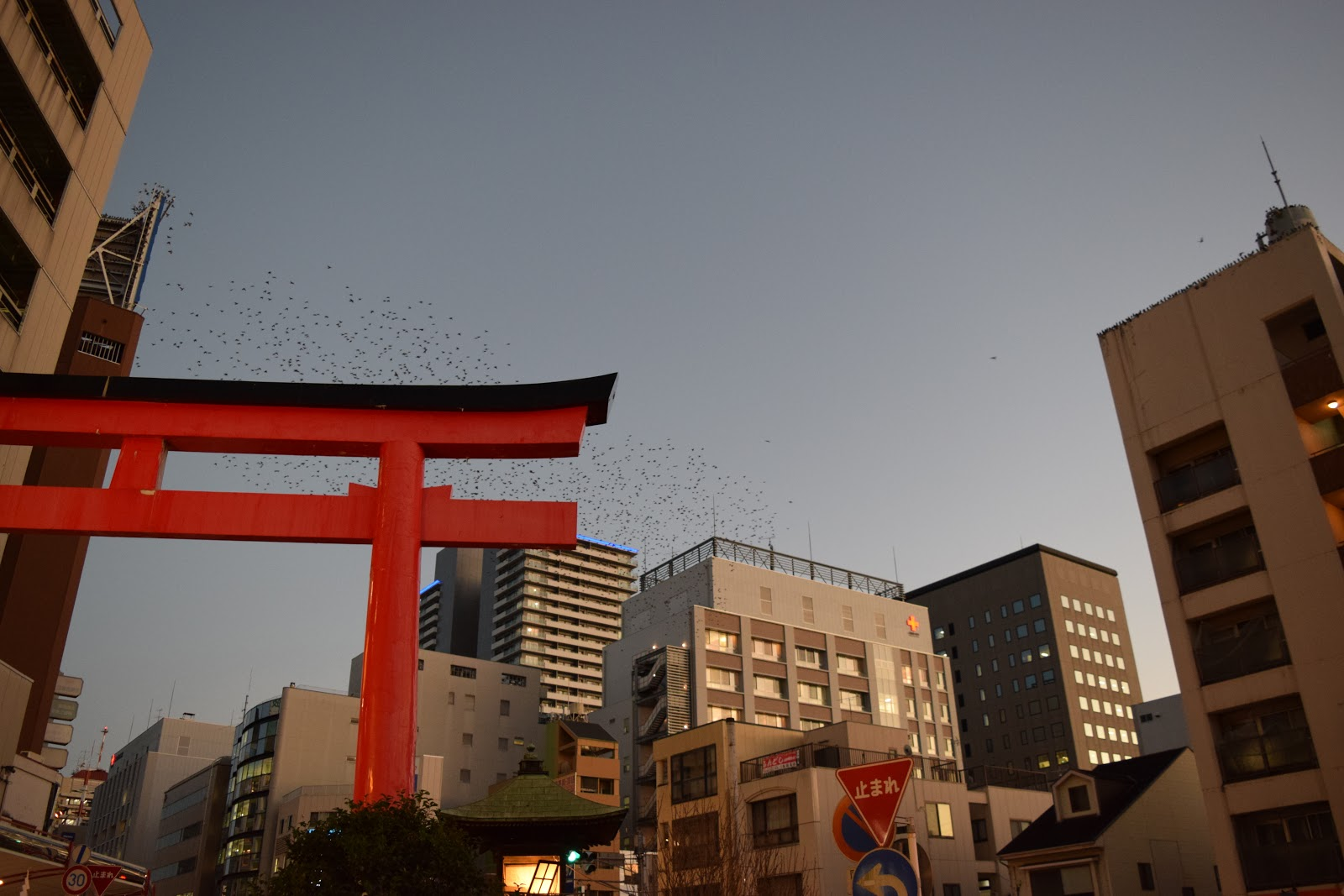Sengen Dori Torii gate in Shizuoka City