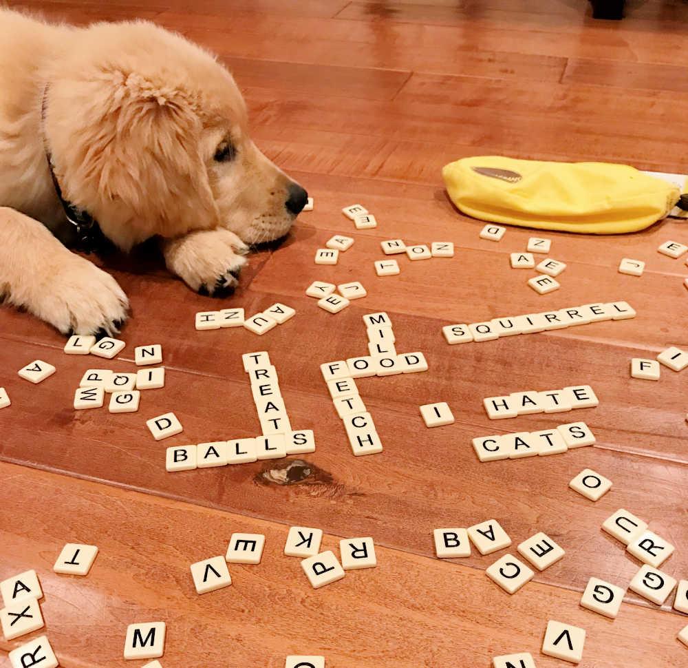 DOG PLAYING BANANAGRAMS