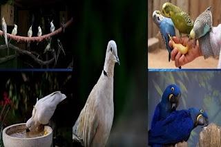 طيور الببغاء