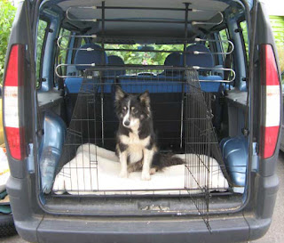 Dog sitting in a crate at the back of a van