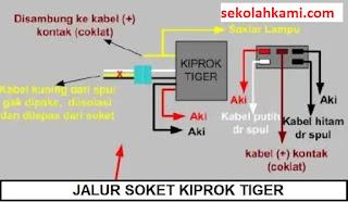 jalur kiprok tiger