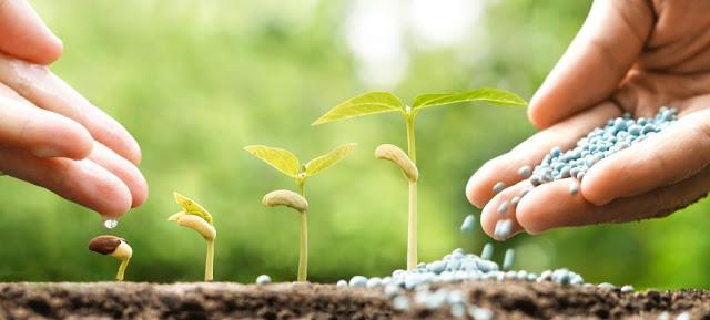 Planting Seedlings Doha Qatar