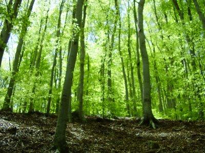 Bosque templado for Arboles de hoja perenne para clima frio