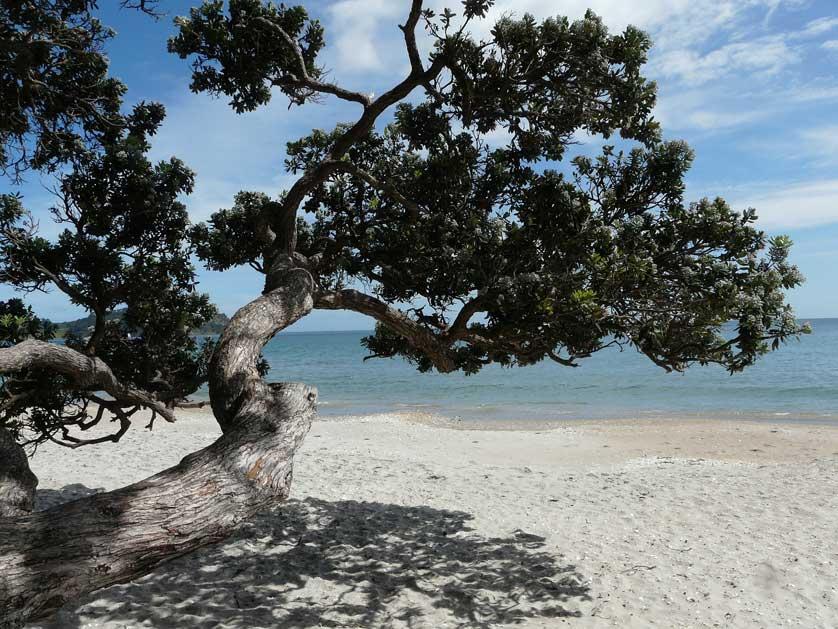 Oneroa Beach, Waiheke Island, New Zealand