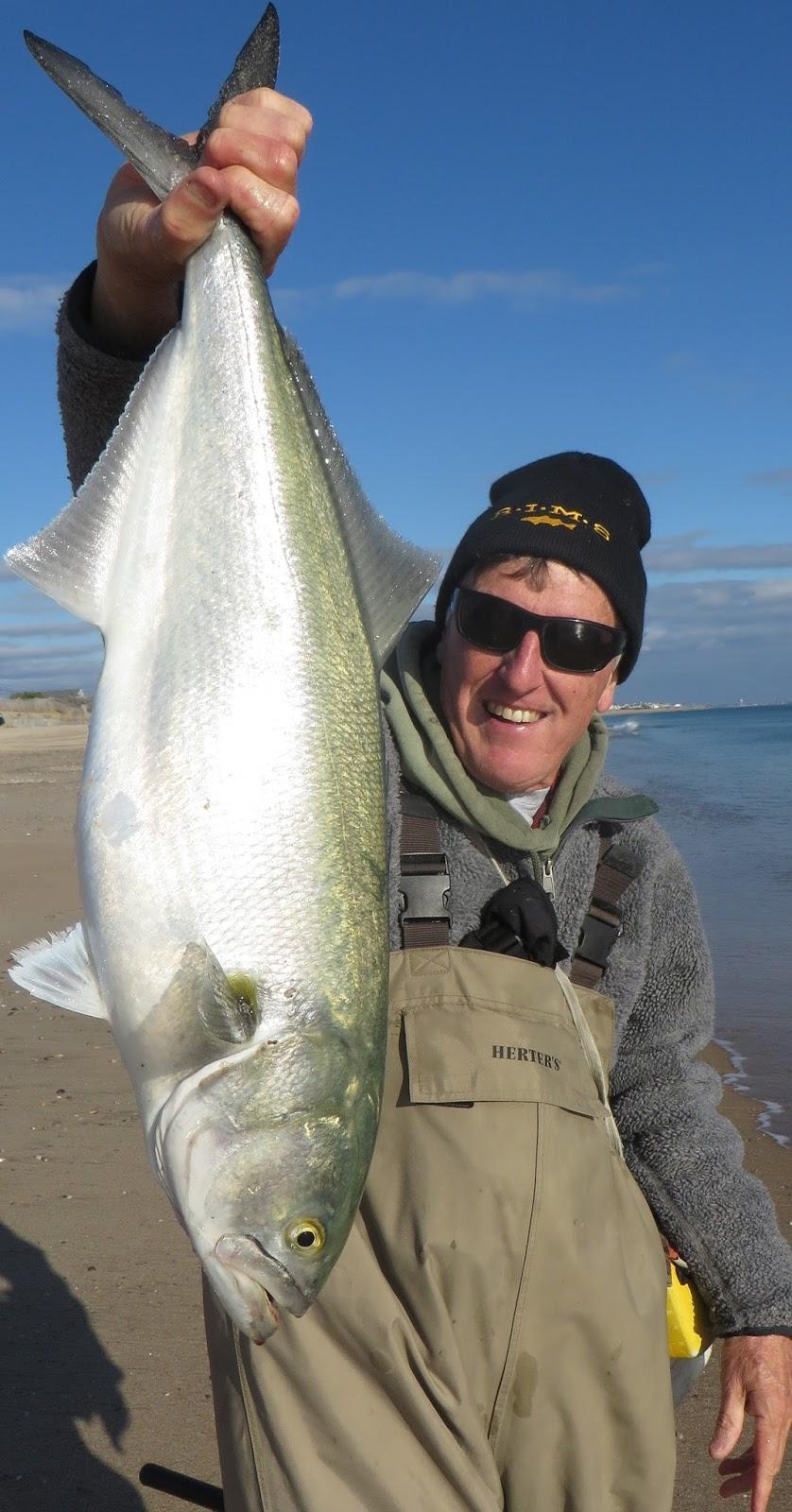 Rhode island striped bass the craziness continues in a for Striper fishing ri