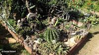Succulent corner, Diamond Head Community Garden - Waikiki, HI