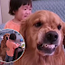 Golden retriever protects little girl as she is being scold by her mother