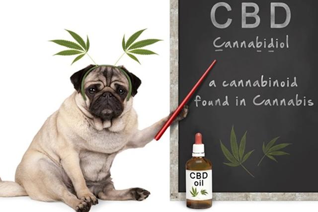 CBD Oil, pets, taking care of pets, animal health, dog care,