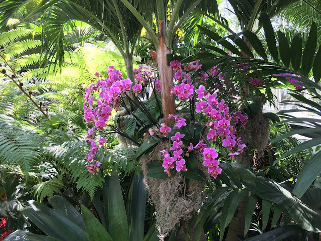 Bart Boehlert 39 S Beautiful Things The Orchid Show At The