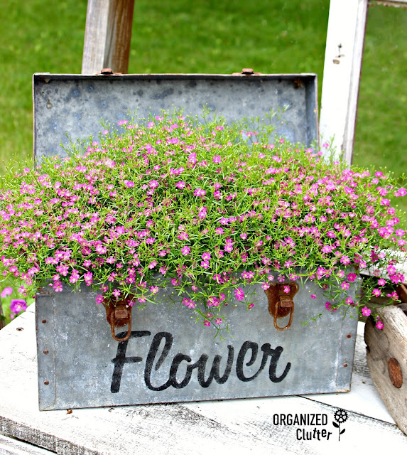 Underused Annuals - Annual Baby's Breath organizedclutter.net